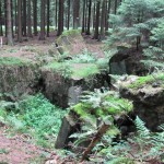 Huertgen Forest, Germany, destroyed German bunker. 2010.
